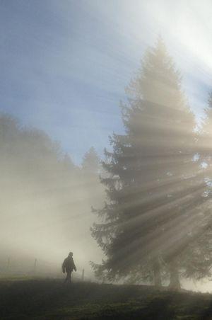 Forest bath Bürgenstock - VisitLovers