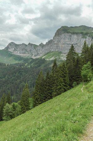 Wildlife observation path - VisitLocals