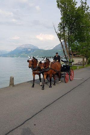 Rebi's Kutschenfahrten und Ponyreiten