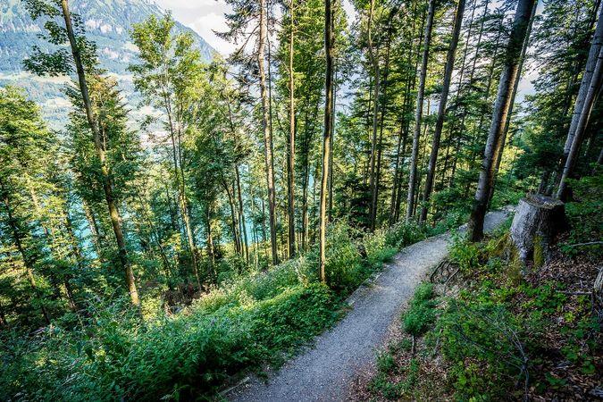 Durch den Brennwald