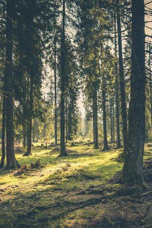 Sagen aus Unterwalden
