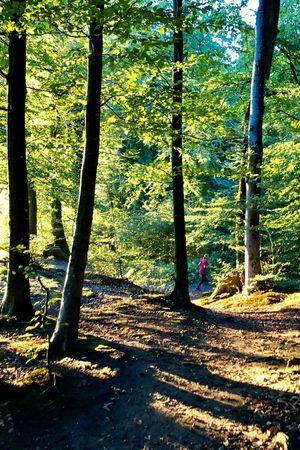 Relaxen im Wald - VisitLocals