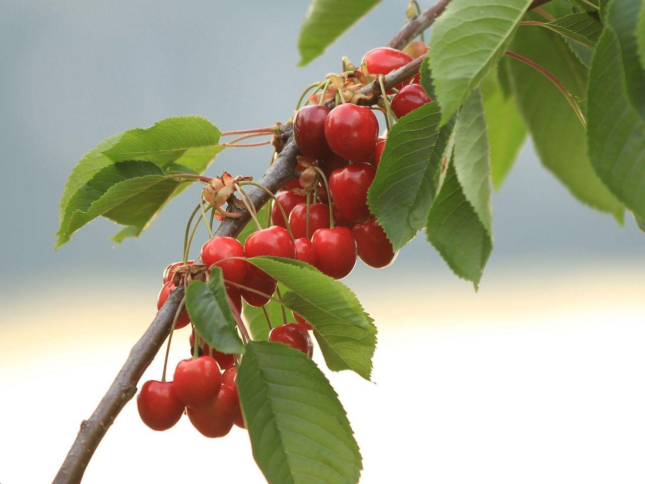 Educational fruit trail Kehrsiten