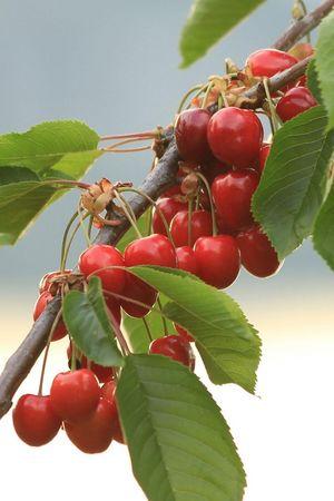 Obstlehrpfad Kehrsiten