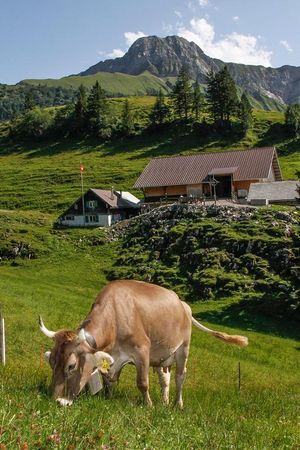 Alphütte Unterst-Hütte, Niederbauen