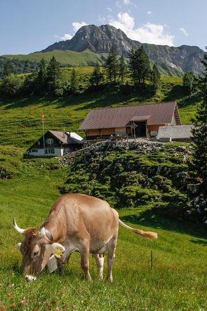 Alpkäserei Unterst-Hütte, Niederbauen