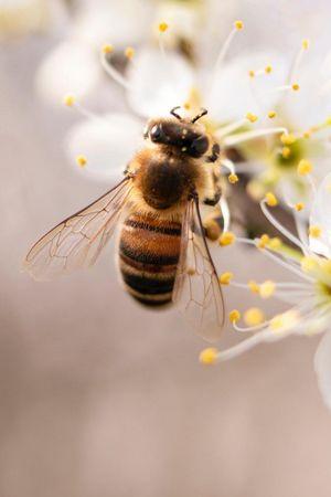 Bienen Tour - VisitLovers