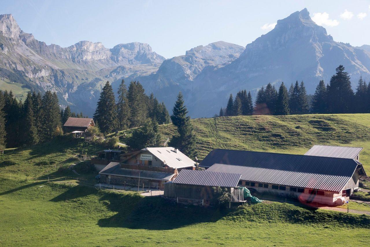 Alpine Cheese Trail for families, Untertrübsee/Gerschnialp section