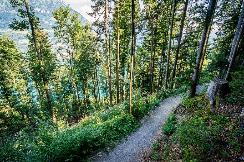Waldstätterweg Etappe 7: Beckenried - Rütli